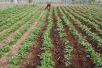 Ξεκίνησαν οι αιτήσεις για ένταξη στο Πρόγραμμα Νέων Αγροτών - 8.196.000 ευρώ στην Ήπειρο - : IoanninaVoice.gr